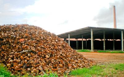 Biomasse Projekt Svilosa in Bulgarien